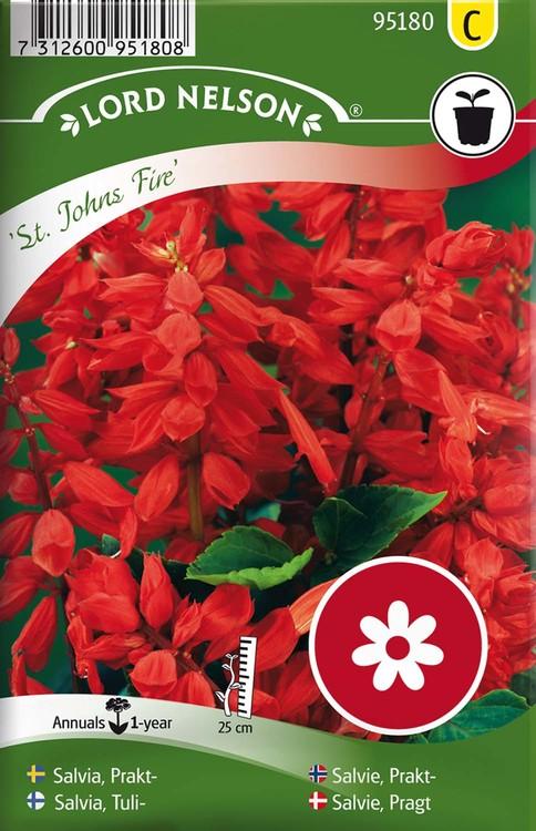 Salvia, Prakt-, St. Johns Fire, röd
