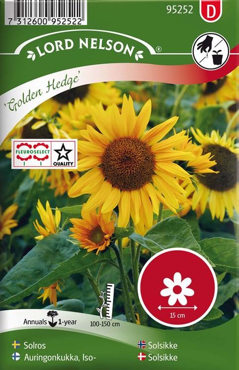 Solros, Golden Hedge, halvhög