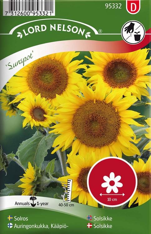 Solros, Sunspot, låg