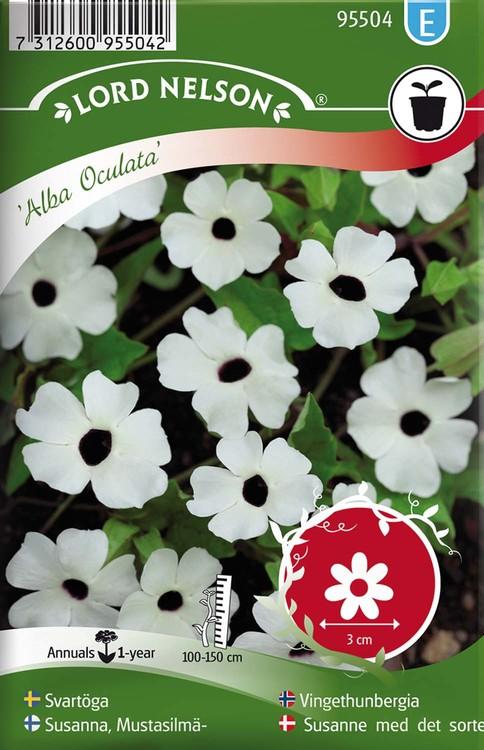 Svartöga, Alba Oculata, vit med öga