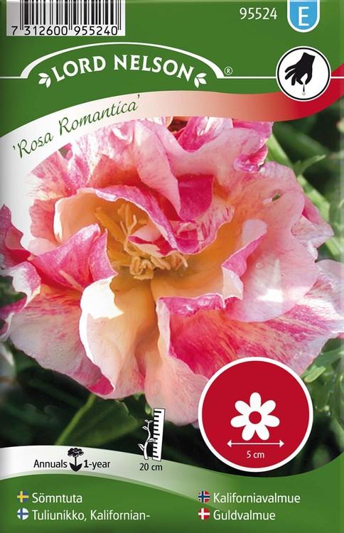 Sömntuta, Rosa Romantica