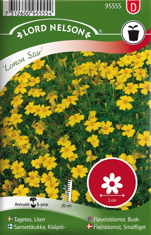 Tagetes, Liten,  Lemon Star