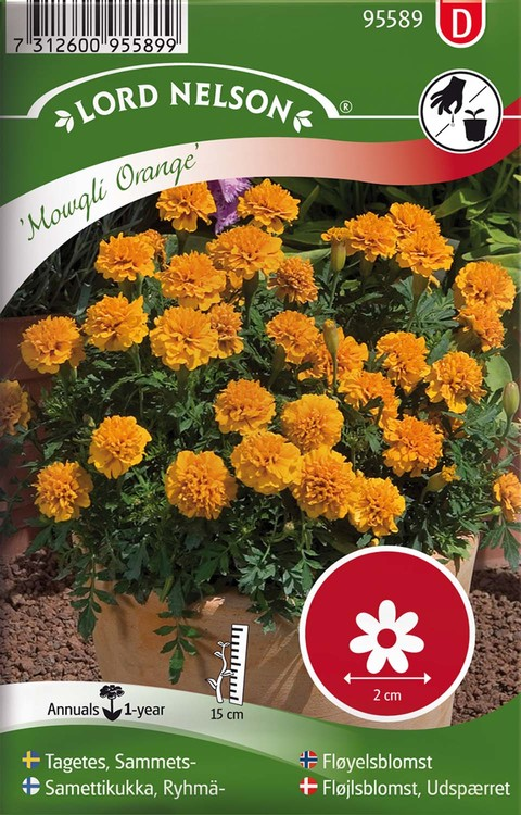 Tagetes, Sammets-, Mowgli Orange, mini