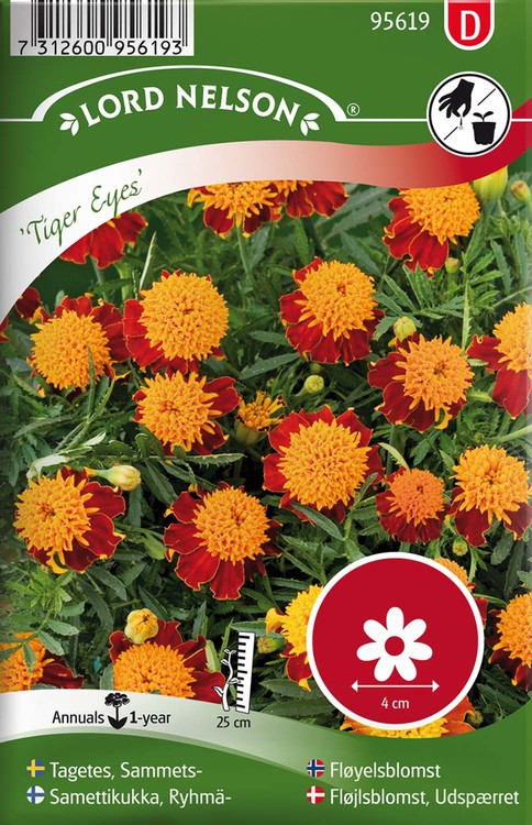Tagetes, Sammets-, Tiger Eyes