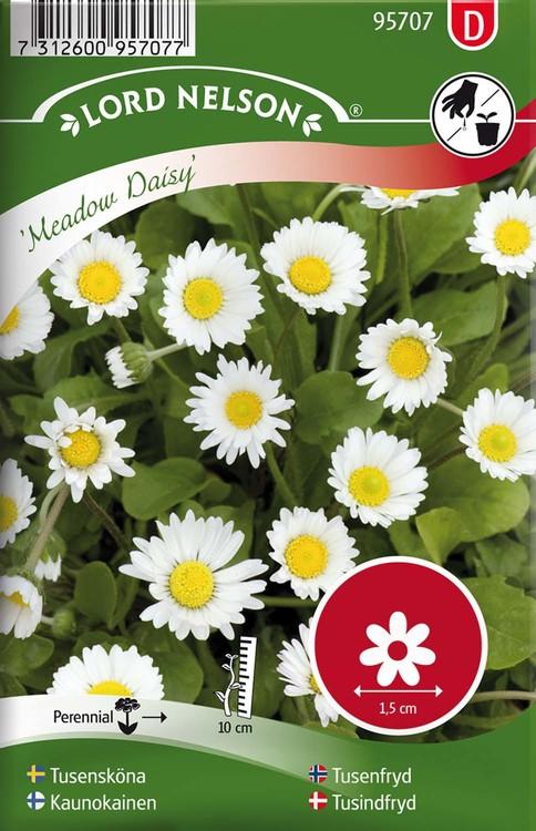 Tusensköna, Meadow Daisy, vildform, vit