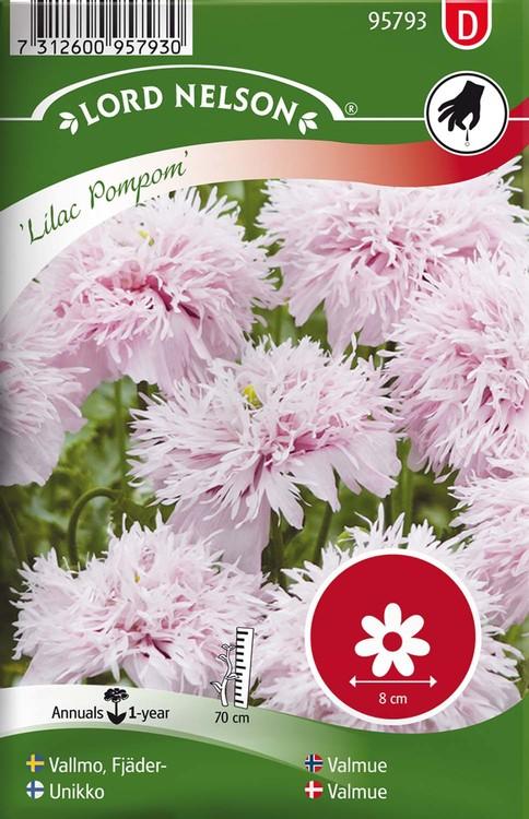 Vallmo, Fjäder-, Lilac Pompom