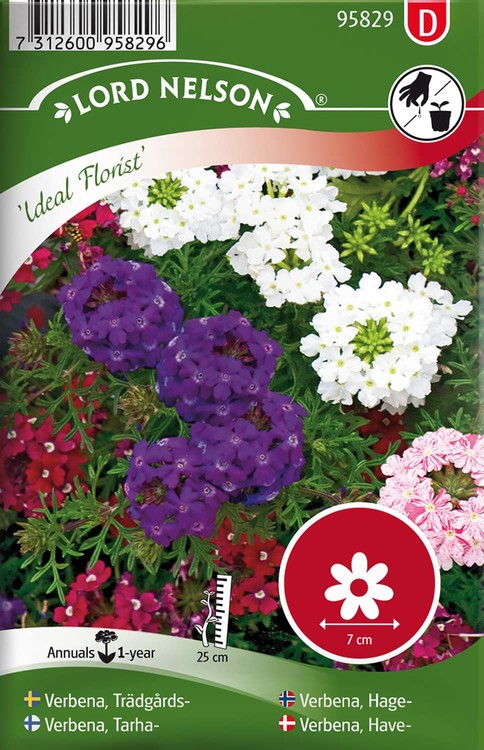 Verbena, Trädgårds-, Ideal Florist