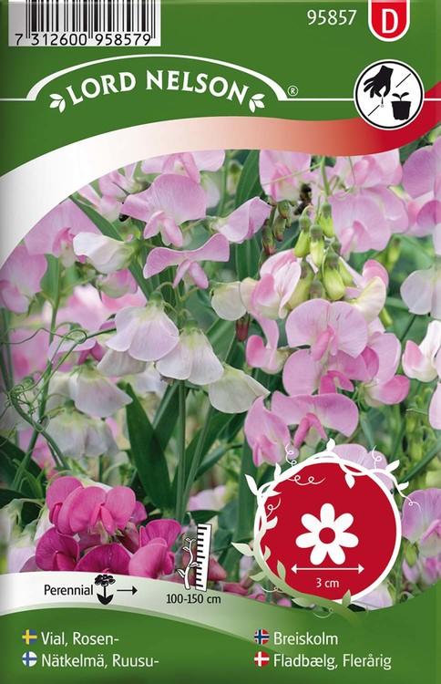 Vial, Rosen-, rosa, flerårig