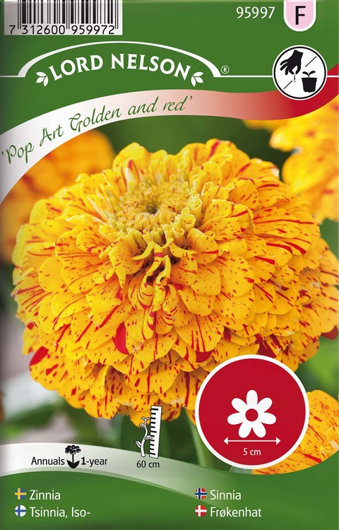 Zinnia, Pop Art Gold & Red