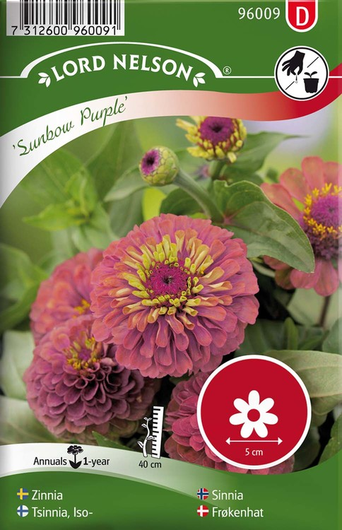 Zinnia, Sunbow Purple
