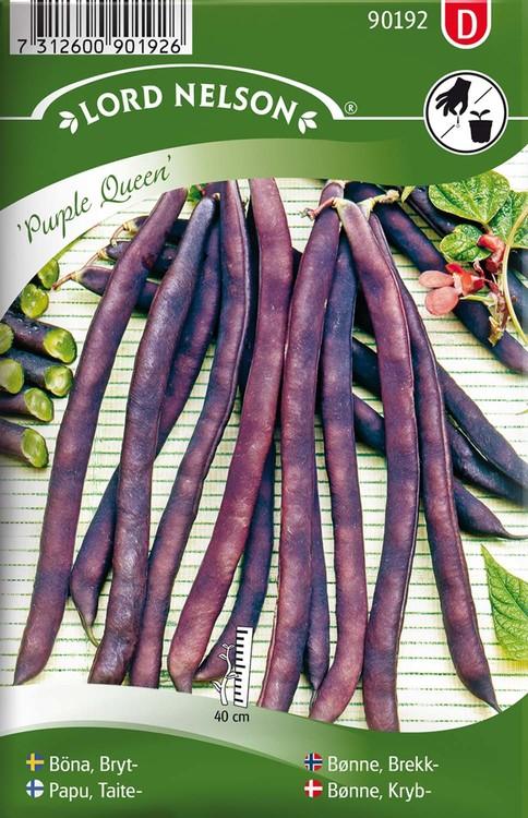 Böna, Bryt-, Purple Queen