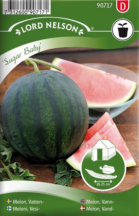 Melon, Vatten-, Sugar Baby