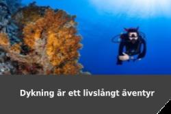 Dyk äventyr