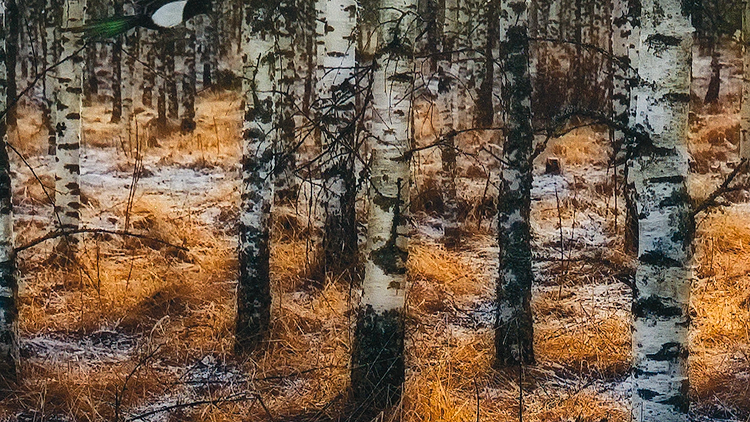 Camouflages - excerpt photographed from the original. Click on image to close.