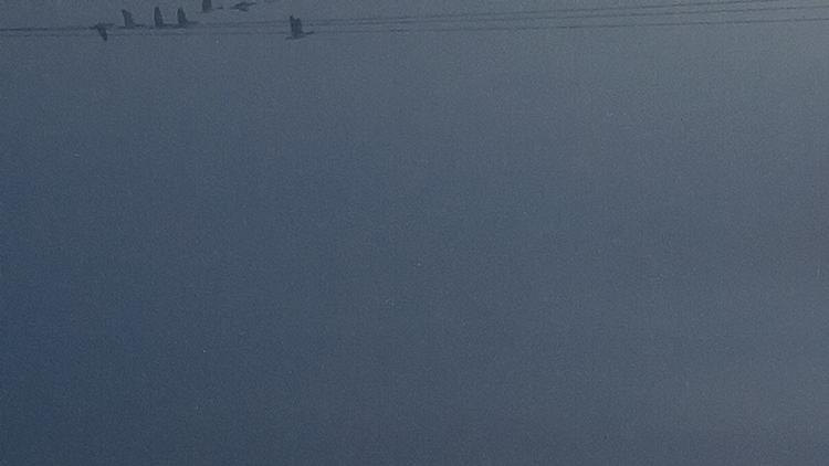 Early birds - avfotograferat utsnitt. Klicka i bilden för att stänga.