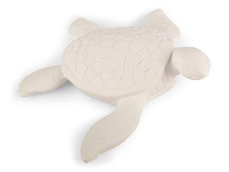 Sköldpadda liten