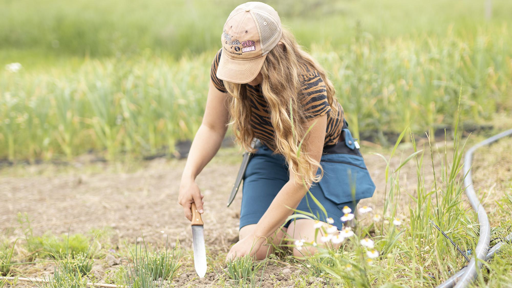 Kvinna sitter på knä i ett par arbetsshorts och planterar med en HoriHori kniv.