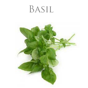 BASIL ESSENTIAL OIL / ETERISK OLJA