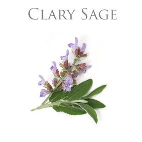CLARY SAGE ESSENTIAL OIL / ETERISK OLJA