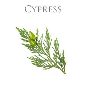 CYPRESS PURE ESSENTIAL OIL / EKOLOGISK ETERISK OLJA