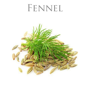 FENNEL (Sweet) ESSENTIAL OIL / ETERISK OLJA