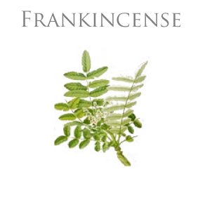 FRANKINCENSE PURE ESSENTIAL OIL / EKOLOGISK ETERISK OLJA