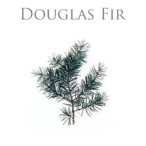 DOUGLAS FIR PURE ESSENTIAL OIL / REN ETERISK OLJA