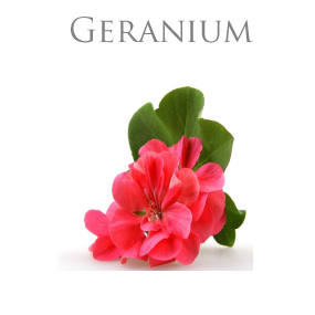 GERANIUM PURE ESSENTIAL OIL / REN ETERISK OLJA