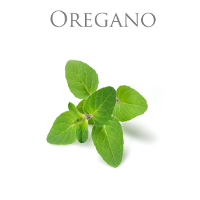 OREGANO ESSENTIAL OIL / ETERISK OLJA