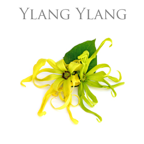 YLANG YLANG ESSENTIAL OIL / ETERISK OLJA