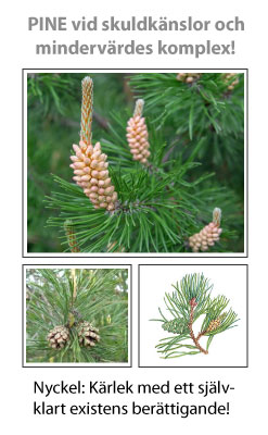 Pine (Tall) Blomessens