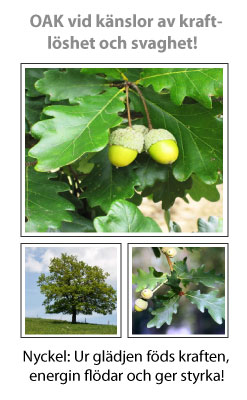 Oak (Ek) Blomessens