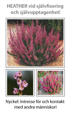 Heather (Ljung) Blomessens