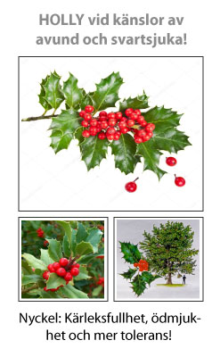 Holly (Järnek) Blomessens