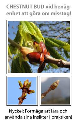 Chestnut Bud (Knopp av hästkastanj) Blomessens