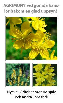 Agrimony (Småborre) Blomessens