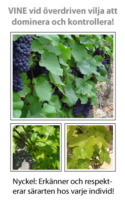 Vine (Vinranka) Blomessens