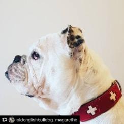 HUNTER Swiss Halsband Röd Ekologiskt Läder
