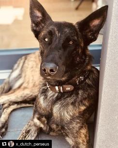 HUNTER Hundhalsband Arizona Brun