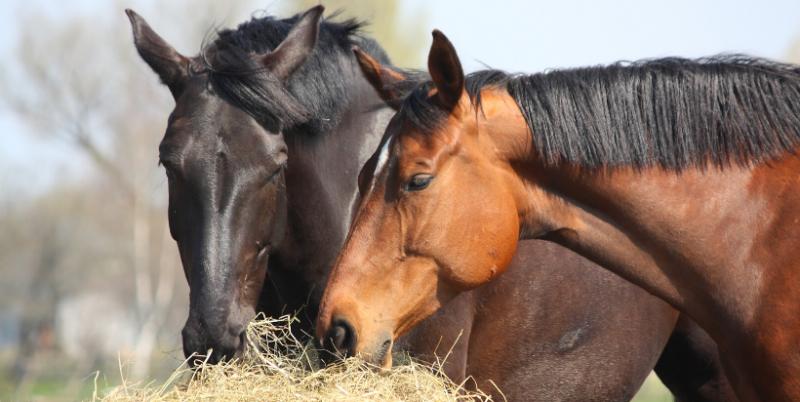 Diarré hos häst - ett tydligt tecken på obalans i mag-tarmsystemet.