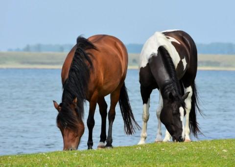 AME Funktionsmedel. Tillskott sammansatta av naturliga ingredienser för att stötta hästen.