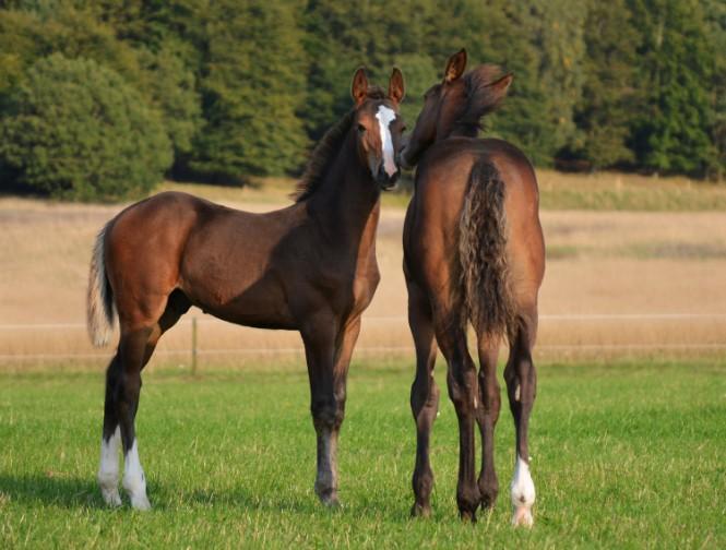 Eqvital AB Horse amino