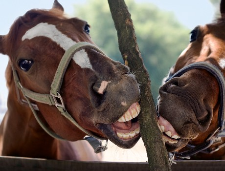 EMB analys mineralanalys för häst