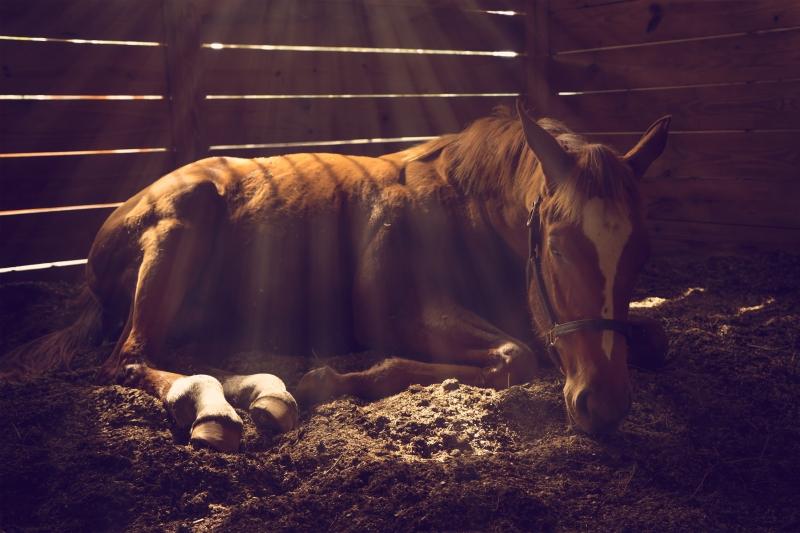 Hur mår hästen idag?