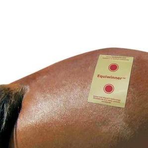 Equiwinner, speciellt utformade naturliga elektrolyter för häst
