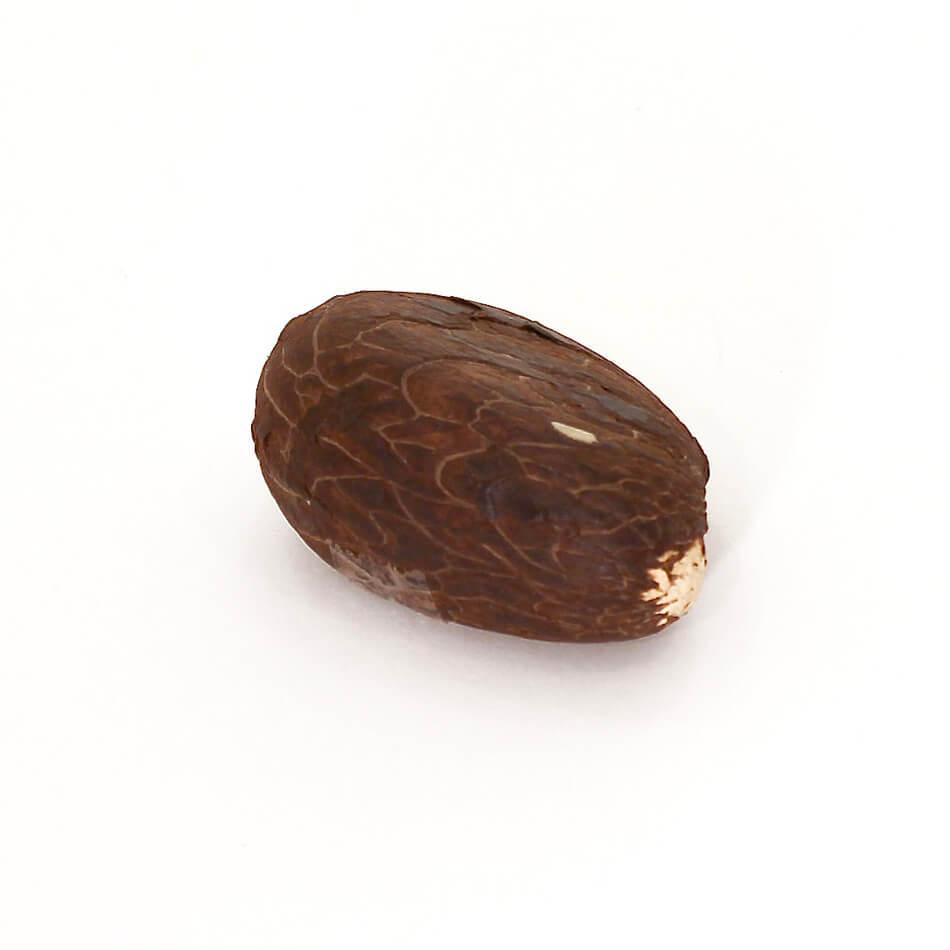 Taguanöt. en stennöt som kan göras om till härliga smycken. Fair Trade från regnskogen.