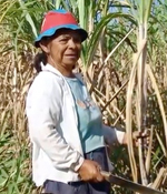 Kvinna som skördar sockerrör i kooperativet Manduvirá i Paraguay