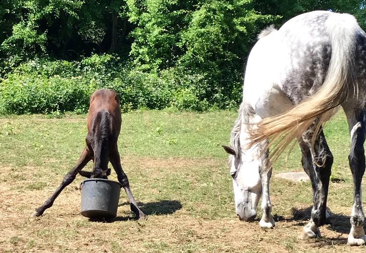 Avelsston, föl och unghästar