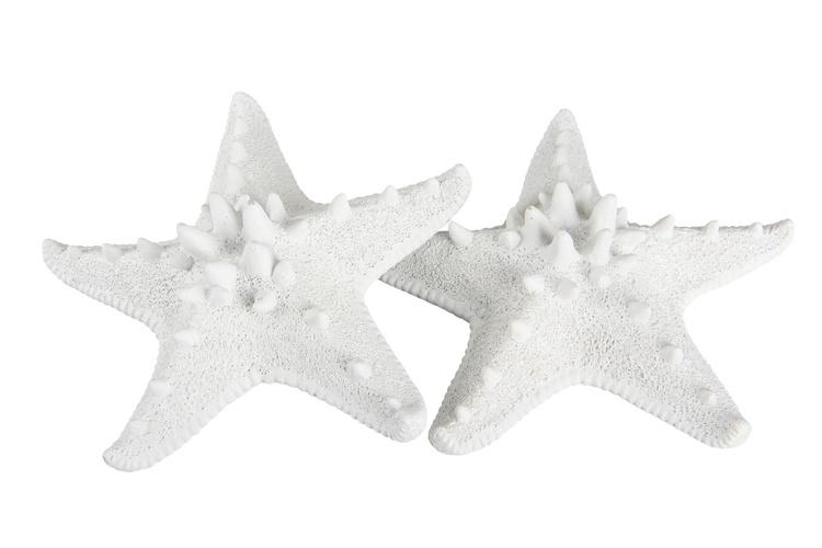 Sjöstjärna  Vit stor