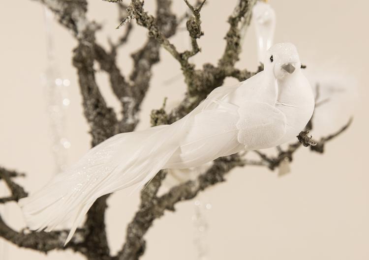 Vit fågel med vackra fjädrar
